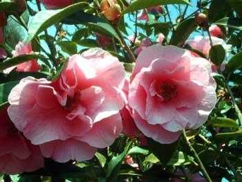 gardenblog77.jpg