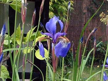 gardenblog78.jpg