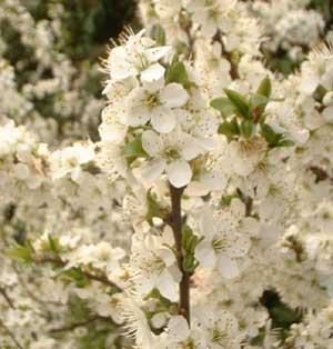 gardenblog79.jpg