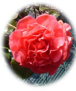 gardenblog81.jpg