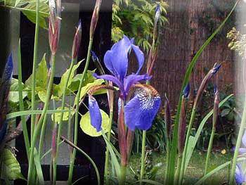 gardenblog782.jpg